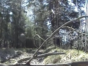 Humping the branch of a fallen tree